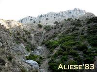 Alle pendici di Monte Scuderi  - Alì (7338 clic)