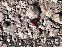 in compagnia alle pendici di Monte Scuderi  - Alì (7295 clic)