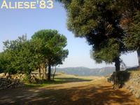 Monte Scuderi - la forestale  - Alì (7844 clic)