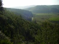 c/da Carbonaro, bosco Magaggiaro  - Montevago (5801 clic)