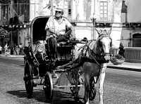 Carrozza  - Palermo (3885 clic)