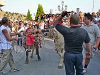 Festa di S.Lucia  - Savoca (5746 clic)