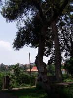 Panorama visto dal villaggio Madonna degli Ulivi  - Viagrande (8622 clic)