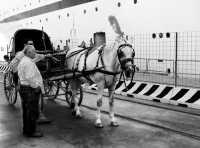 La carrozza.  - Messina (4067 clic)