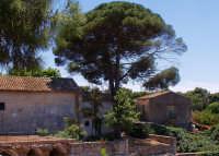 Scatto fatto il 2 giugno nella zona archeologica dell'orecchio di Dionisio  - Siracusa (3843 clic)