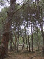 riserva naturale  - Eraclea minoa (2059 clic)