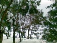 paesaggio innevato febbraio 2009  - Palermo (3977 clic)
