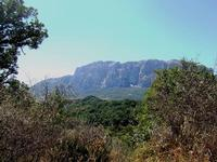 bosco di Ficuzza  - Ficuzza (3774 clic)