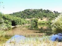 bosco di Ficuzza  - Ficuzza (4249 clic)
