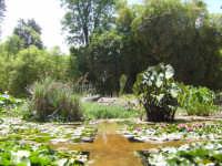 orto botanico di palermo:la vasca PALERMO Carmelinda Mandina