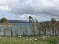 lago di Piana Degli Albanesi  - Piana degli albanesi (2288 clic)