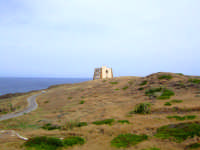 torre dello spalmatore   - Ustica (3527 clic)
