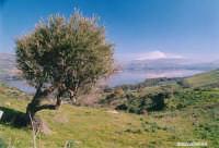 Lago di Pozzillo  - Regalbuto (2609 clic)