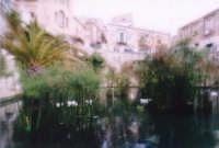 Fonte Aretusa  - Siracusa (2440 clic)