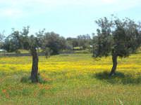 ... i giardini di marzo .  - Messina (3580 clic)