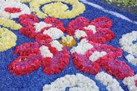 INFIORATA 2011 LA PIU LUNGA INFIORATA DEL MONDO   - San pier niceto (5818 clic)