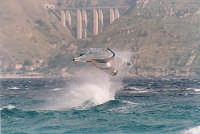 Surf nello Stretto di Messina  - Torre faro (14827 clic)