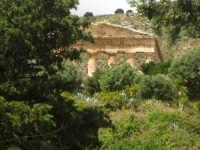 Segesta , scorcio  - Segesta (1780 clic)