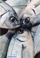 pesce  - Torre faro (6223 clic)