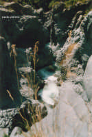 letto del fiume  - Alcantara (4700 clic)