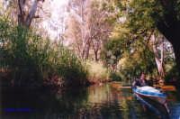 canoa sul fiume Ciane  - Siracusa (2690 clic)