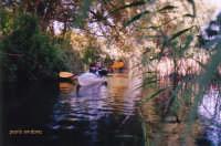 canoa sul fiume Ciane  - Siracusa (2754 clic)