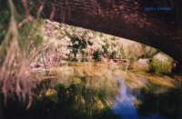 canoa sul fiume Ciane  - Siracusa (2509 clic)