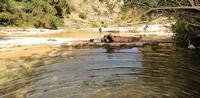CAVA GRANDE DEL CASSIBILE SILENZIOSA FRESCURA  - Avola (3622 clic)