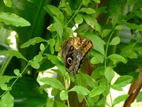 casa delle farfalle 3   - Bronte (3848 clic)