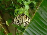 casa delle farfalle 2   - Bronte (3840 clic)