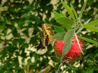 casa delle farfalle 1   - Bronte (4261 clic)