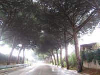 VIA CASTELLANA   - Palermo (2318 clic)