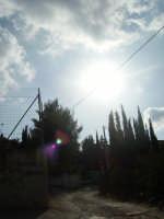 sole trai  cipressi PALERMO giulia maggì
