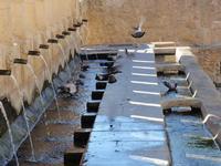 La Grande Fonte    Monumentale abbeveratoio fatto realizzare dal Principe Nicolò Branciforti sui ruderi di un antica fontana tra il 1649 il 1652. Dalla gente del posto è conosciuto con il nome di vintiquattru cannola per via delle 24 cannelle bronzee che riversavano la loro acqua nella vasca sottostante e che, secondo un cronista del Settecento, fu ispirato ad una fontana di Amsterdam.   - Leonforte (1026 clic)