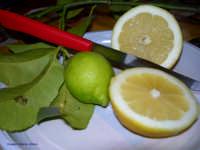 Terra di Limoni    - Casteldaccia (3870 clic)