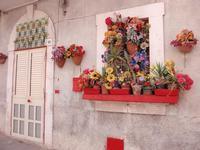 Finestra in fiore    SCICLI Rosario Colianni