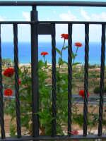 Fiori e Panorama   Panorama dal Santuario   - Altavilla milicia (2685 clic)