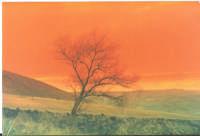 Un Albero, la campagna in un tramonto autunnale   ENNA Rosario Colianni