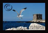 - Torre ligny (4165 clic)