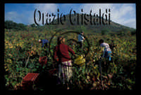 campagna  - Trecastagni (3706 clic)