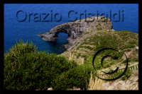isola di pantelleria l'arco dell'elefante  - Pantelleria (2180 clic)
