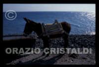 - Alicudi (6268 clic)