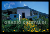 - Ginostra (7773 clic)