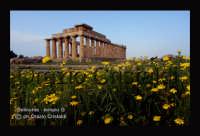 tempio G  - Selinunte (2623 clic)