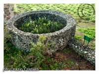 giardino pantesco donato al Fai  da donnafugata  - Pantelleria (8569 clic)