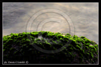 alghe  - Santa tecla (3715 clic)