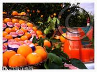Rosaria l'arancia rossa di sicilia  - Catania (3120 clic)