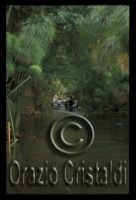fiume ciane  - Siracusa (5032 clic)