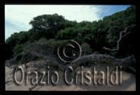 -  - Irminio (6615 clic)