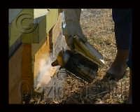 preparazione delle arni per l'estazione dei telai di miele  - Sortino (4548 clic)